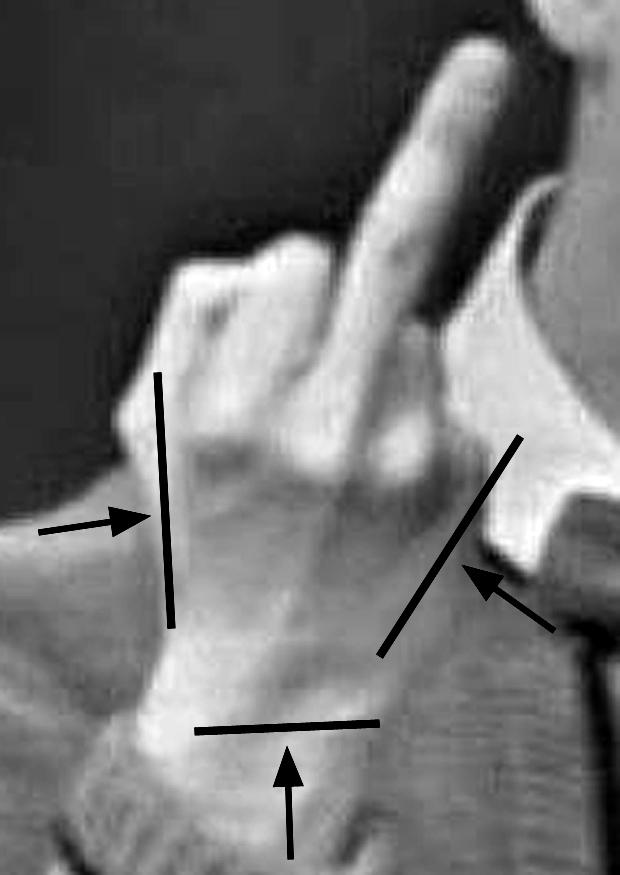 Mister Rogers middle finger myth